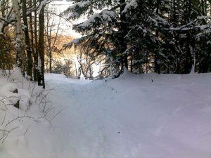 zdjęcie w lesie zimą 1