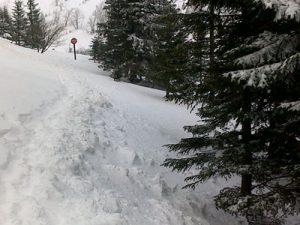 zdjęcie w lesie zimą 2